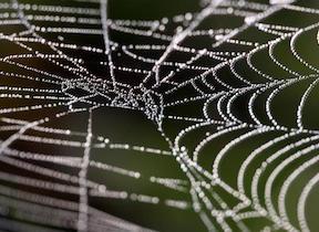 dew_web